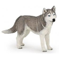 Husky Siberiano FigurIta Perro